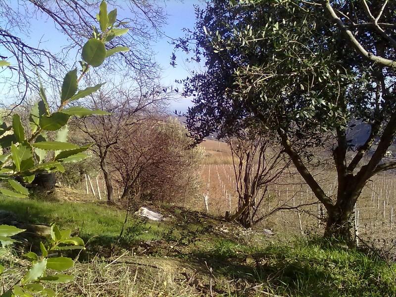 Colline picene, ulivi, bei panorami: qui uno scorcio da Ripatransone