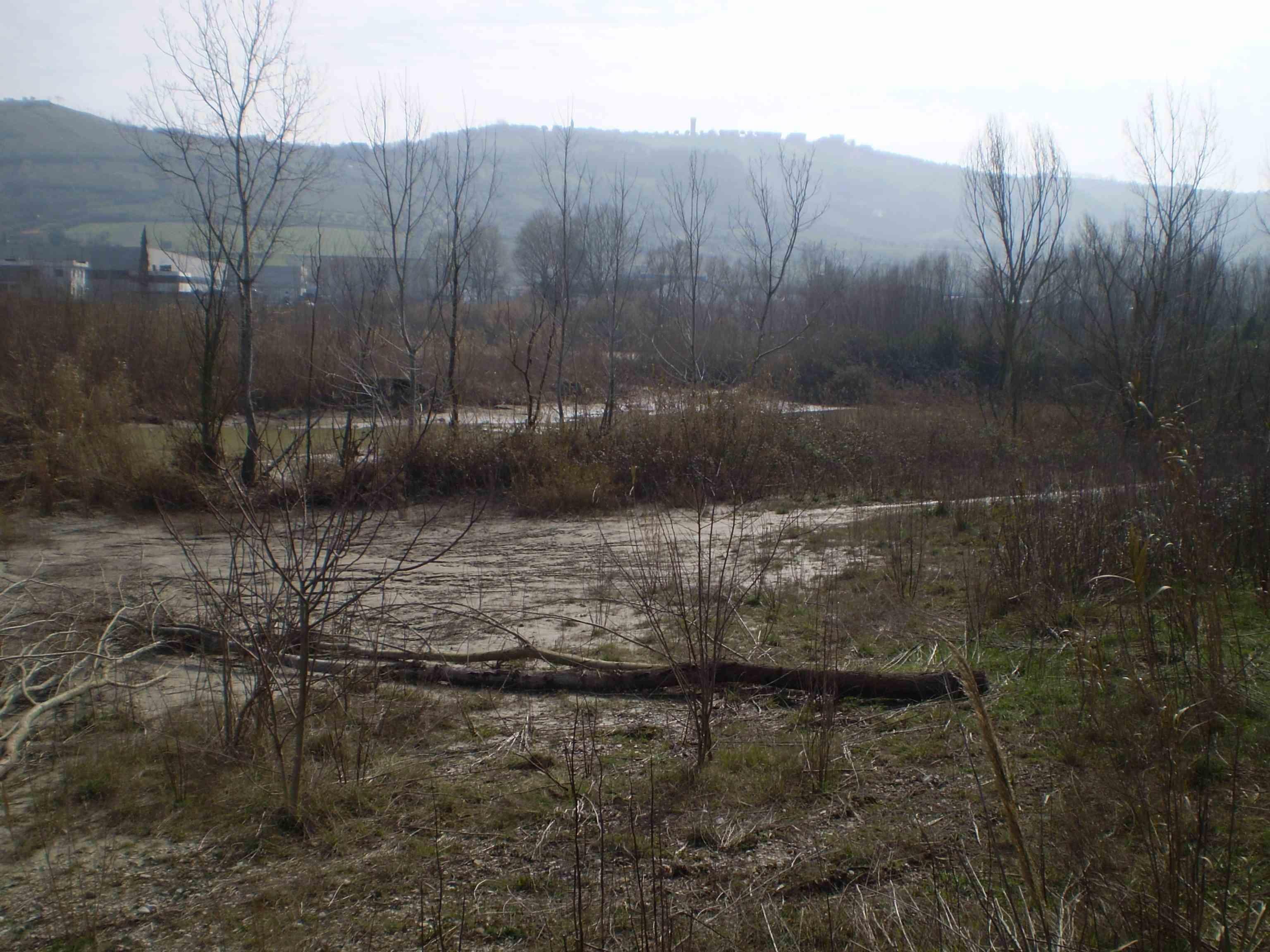 Tronchi tagliati ai margini del fiume Tronto 2