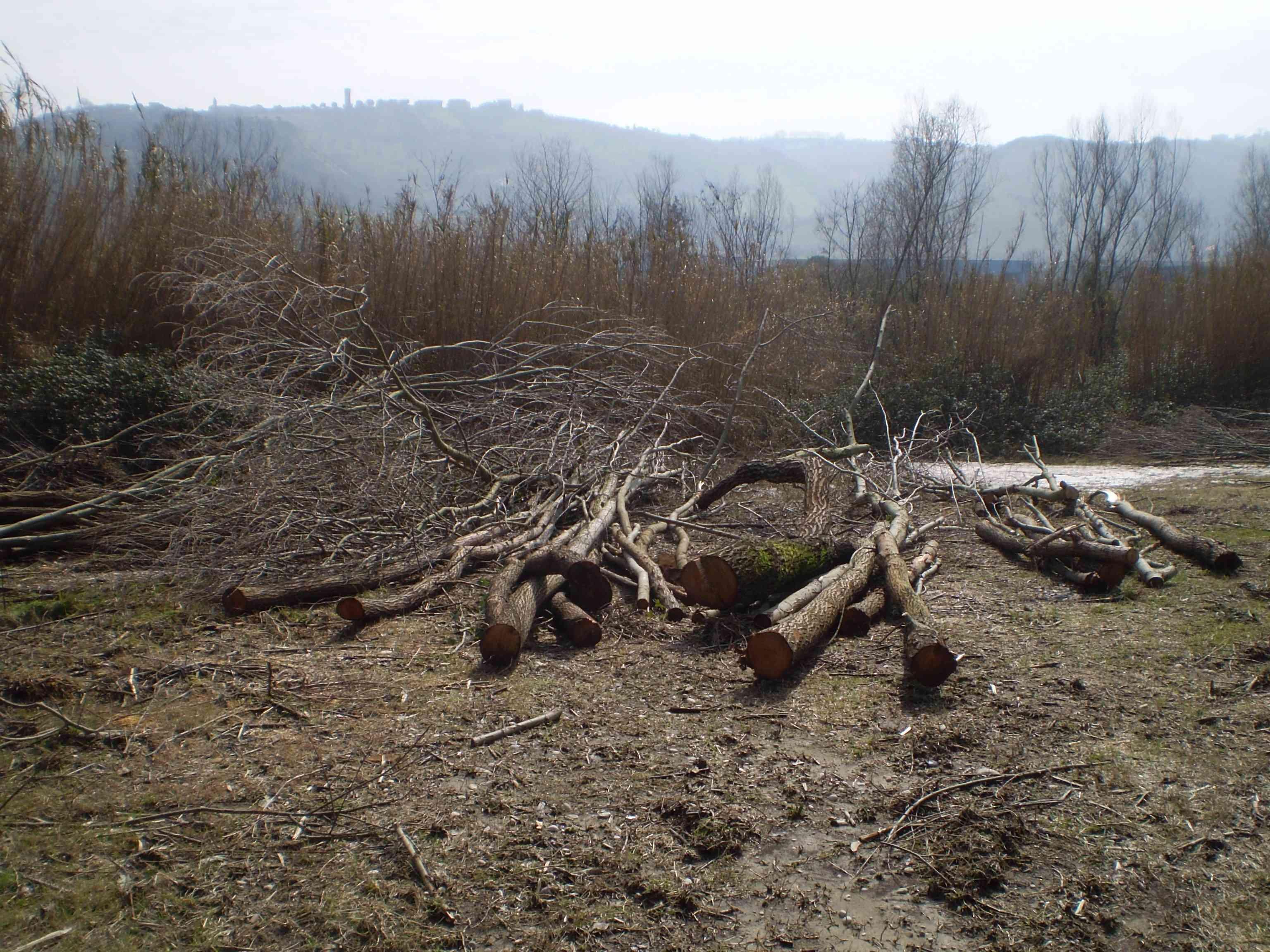 Tronchi tagliati ai margini del fiume Tronto 3