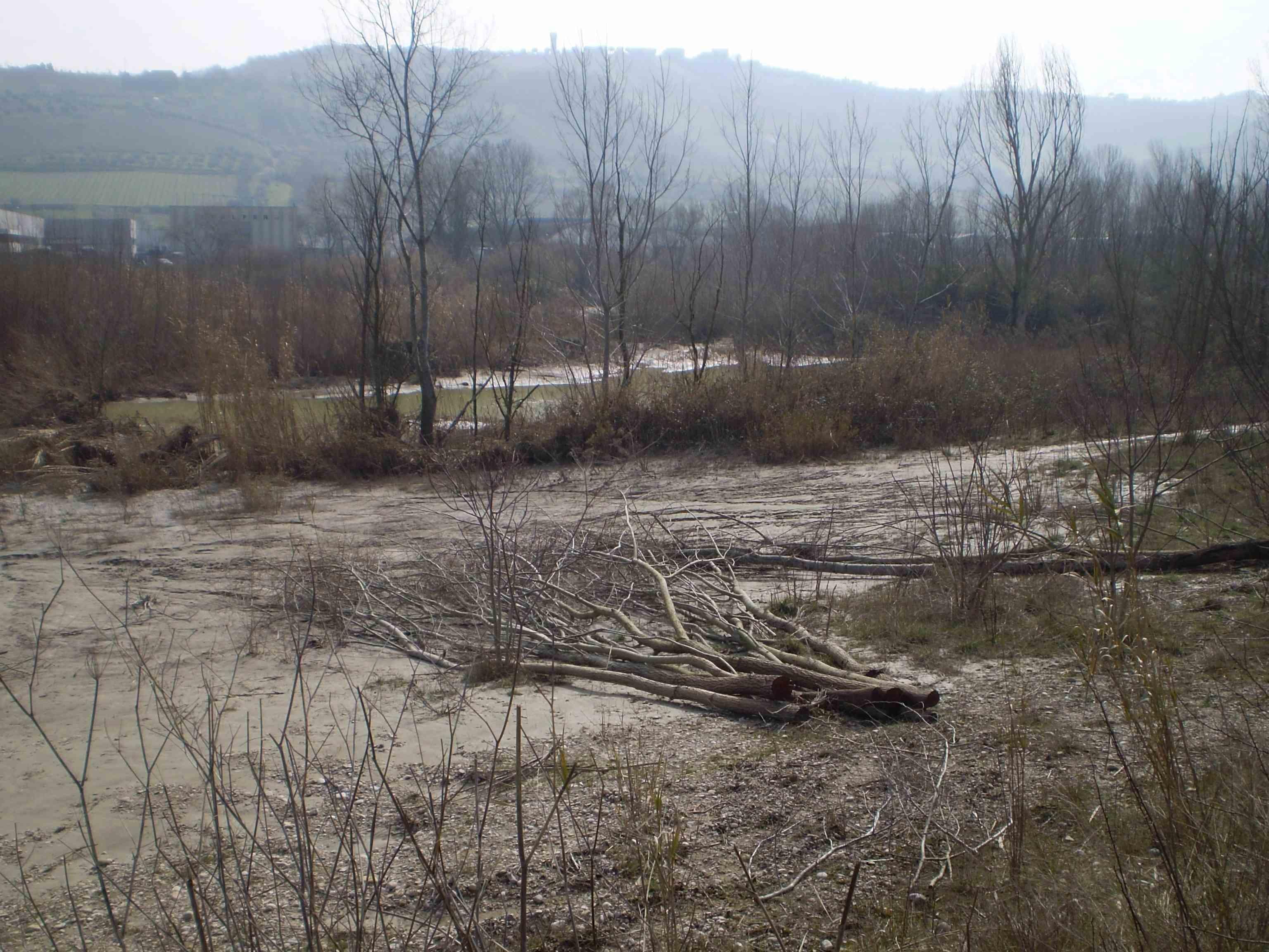 Tronchi tagliati ai margini del fiume Tronto 4