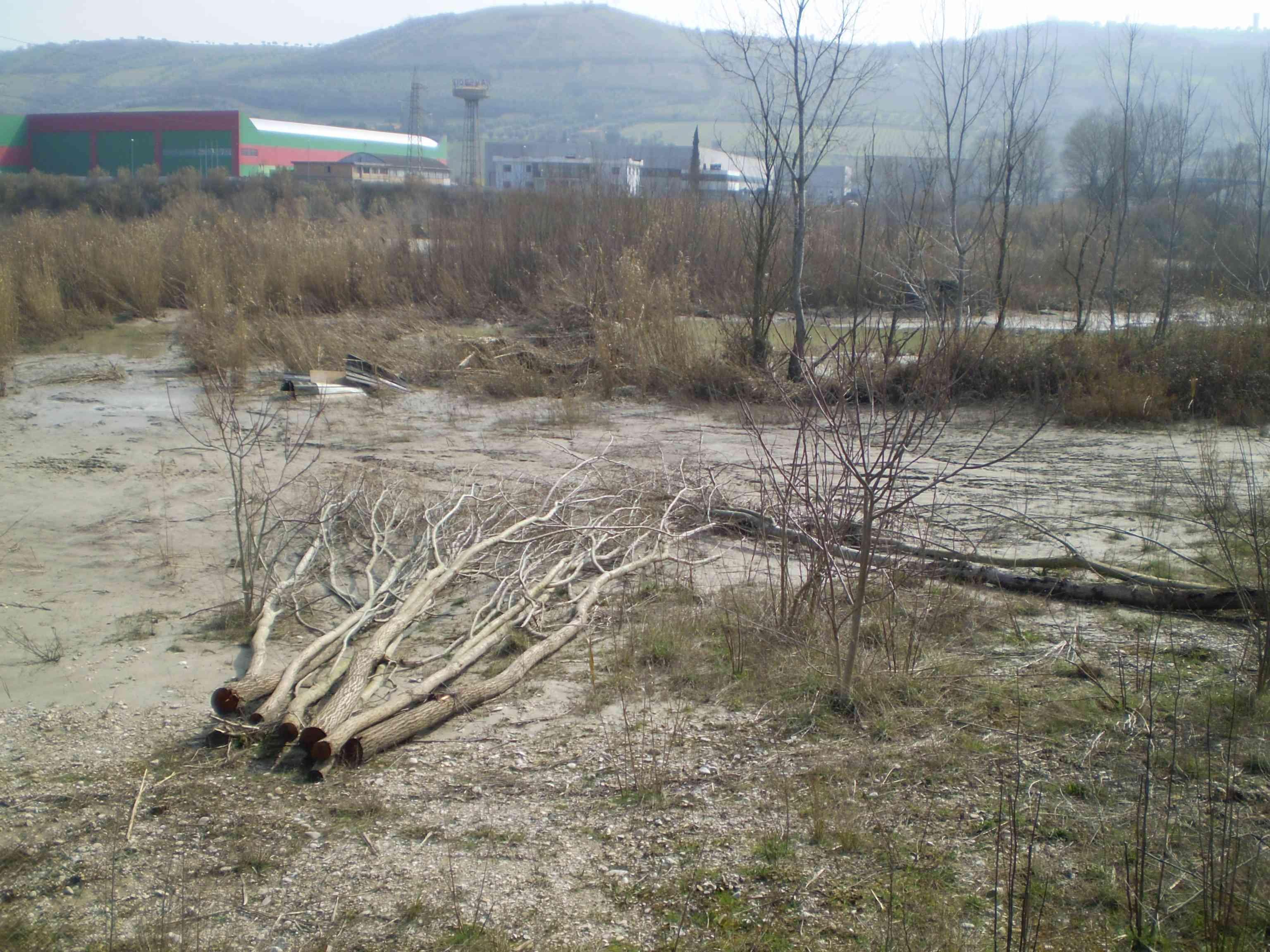 Tronchi tagliati ai margini del fiume Tronto durante il recente maltempo