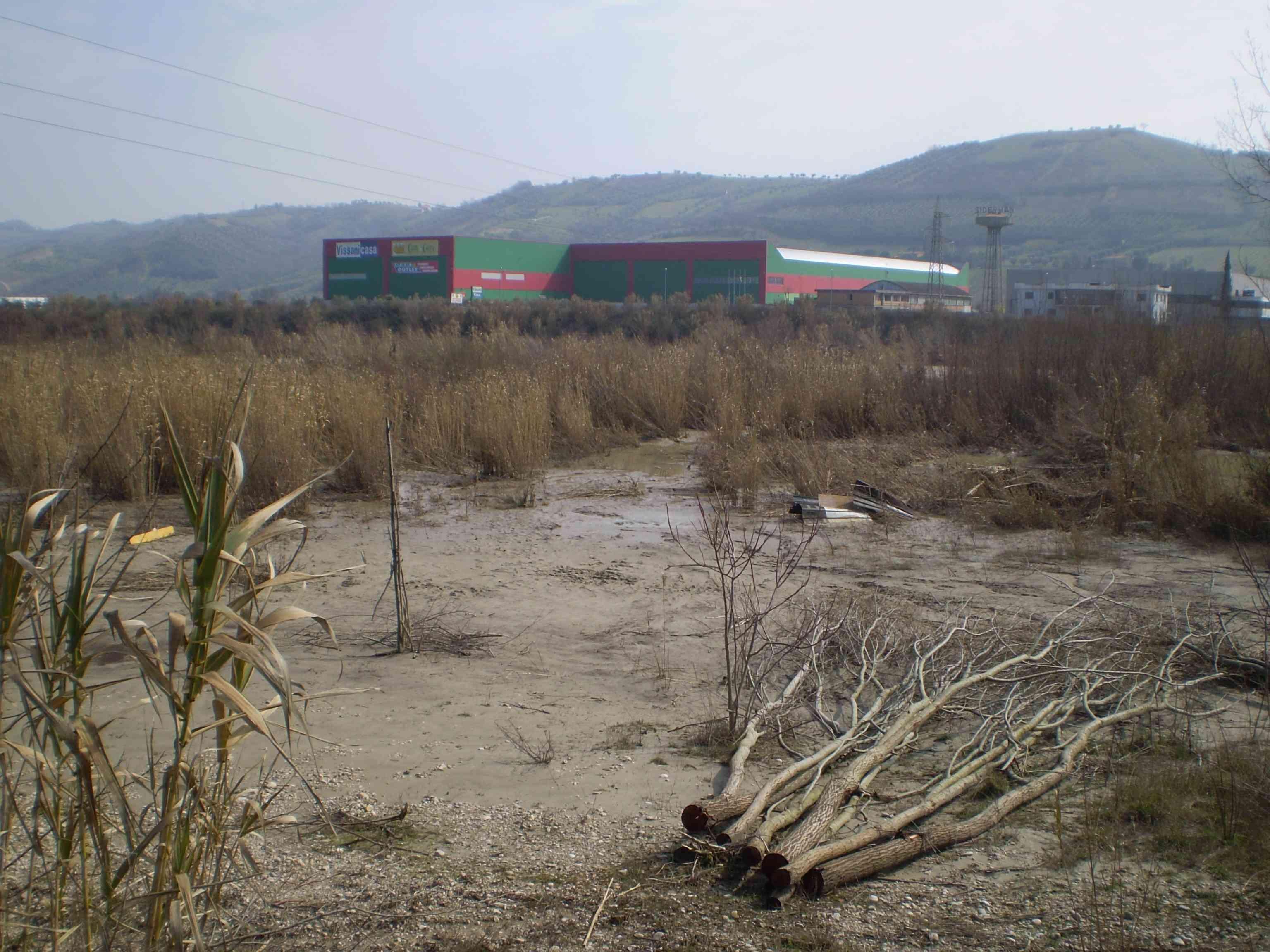 Tronchi tagliati ai margini del fiume Tronto