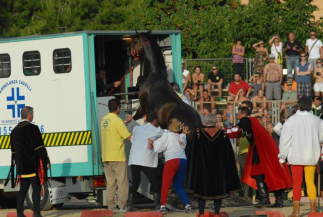 Quintana agosto 2011 (foto Troiani): cavallo di Porta Tufilla accudito e poi caricato sul mezzo adibito all'assistena per cavalli (1)