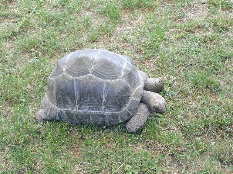 tartaruga esposta a wild ascoli