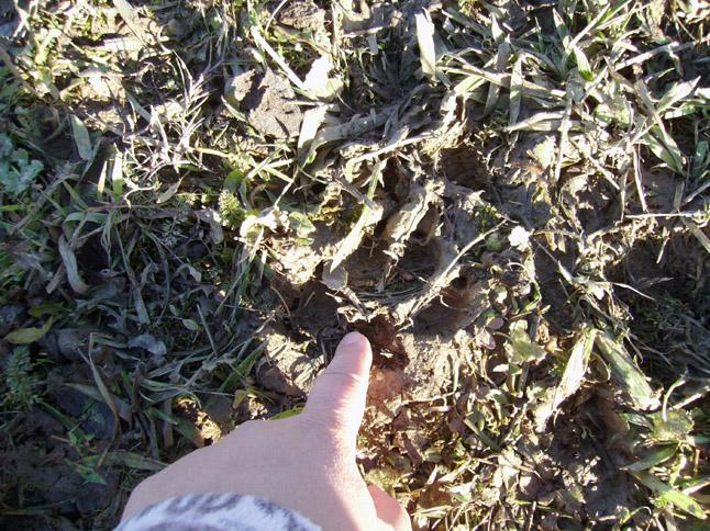 L'impronta di un lupo a San Marco lo scorso inverno