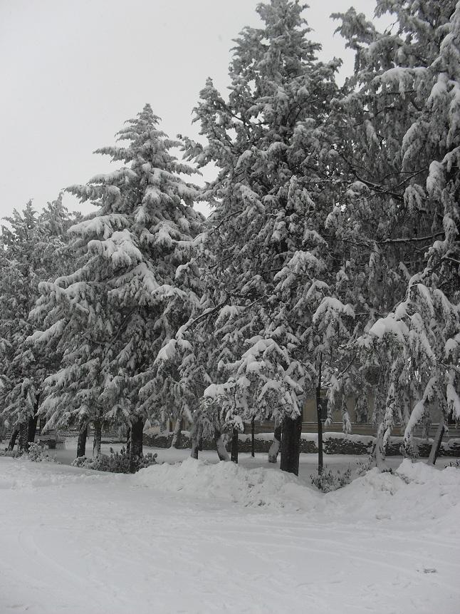 Montefiore nella neve dell'11 febbraio, foto di Alessandra