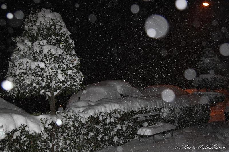 Neve, 10 febbraio 2012, foto di Marta Bellachioma (3)