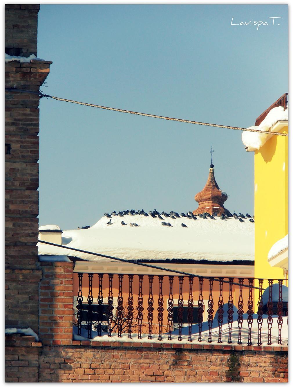 Neve, Controguerra, 12 febbraio 2012 foto Teresa Di Lorenzo 1