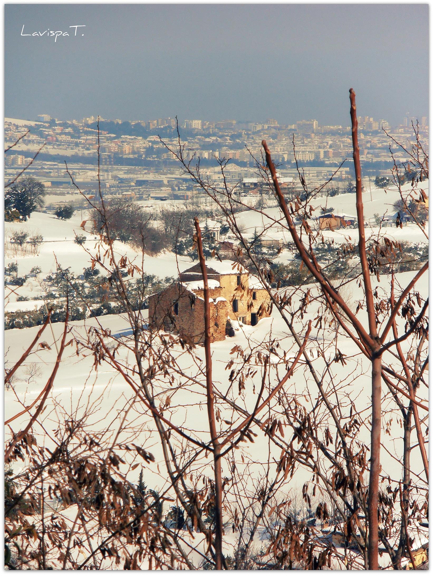 Neve, Controguerra, 12 febbraio 2012 foto Teresa Di Lorenzo 2