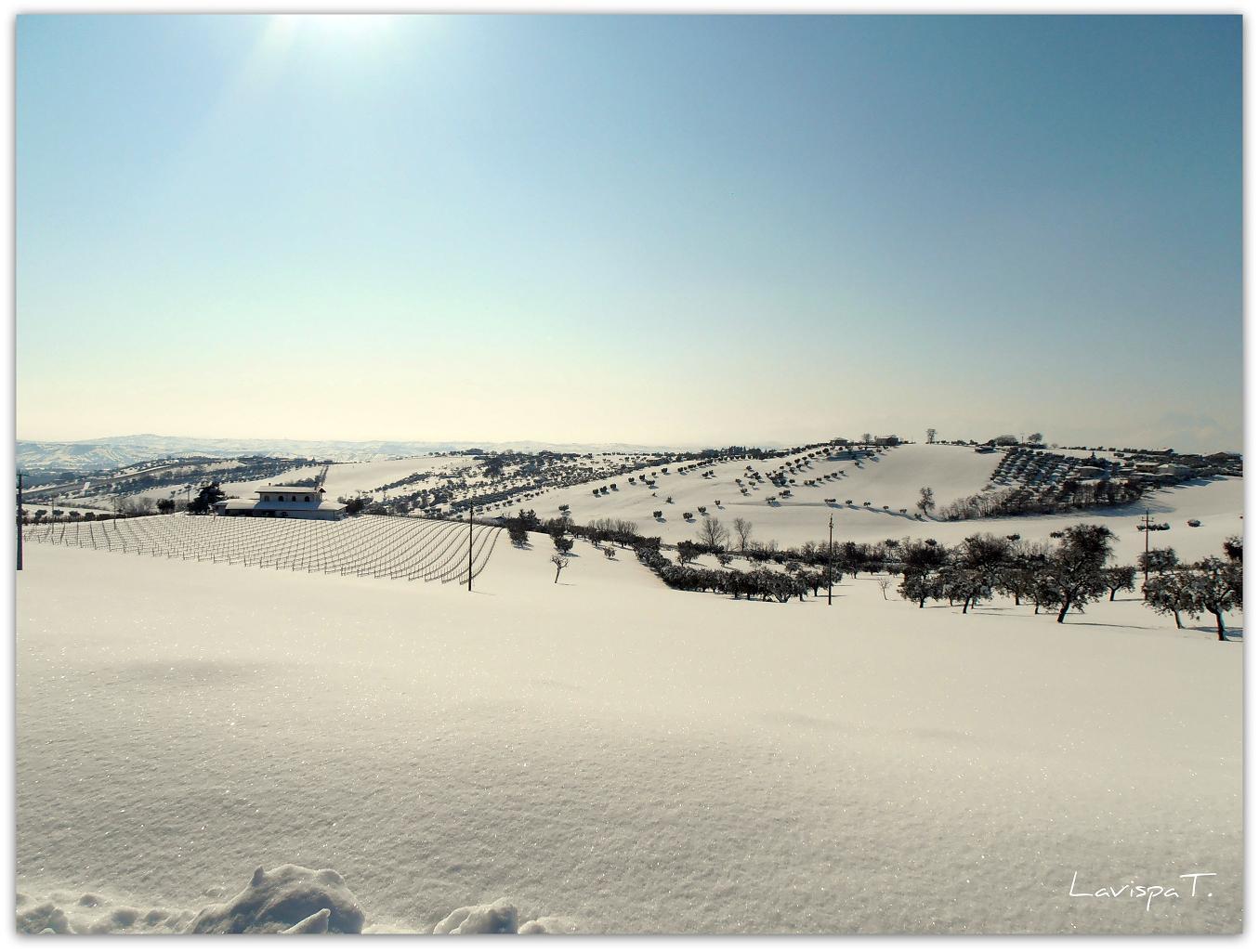 Neve, Controguerra, 12 febbraio 2012, foto Teresa Di Lorenzo 3