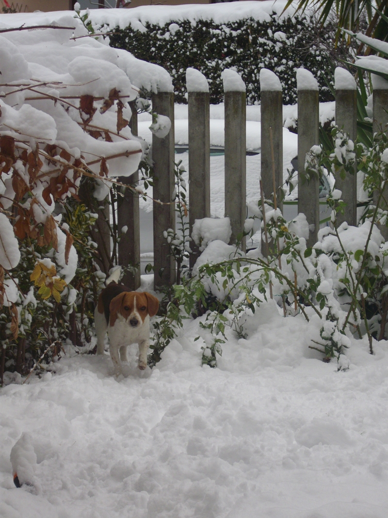 Neve a Centobuchi, 10 febbraio 2012, Irene Bergamante (2)