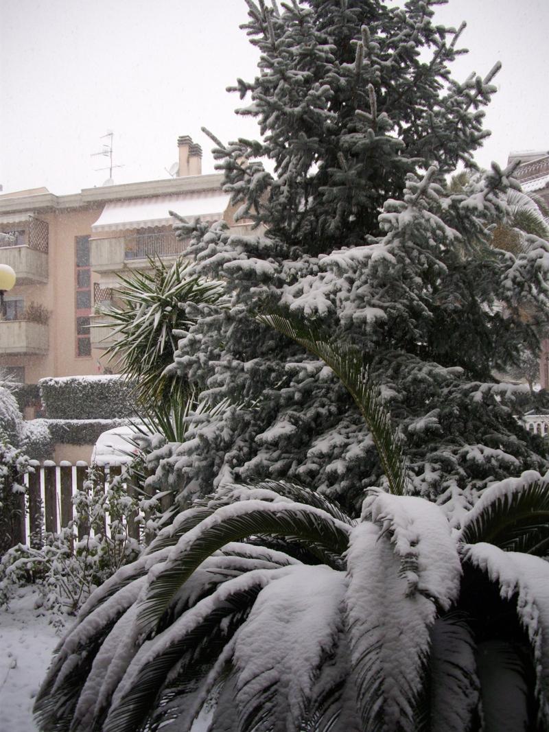 Neve a Centobuchi, 10 febbraio 2012, Irene Bergamante