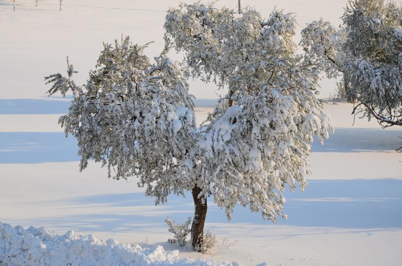 Neve a Cupra Marittima, 11 febbraio 2012 foto Stefano Brutti 4