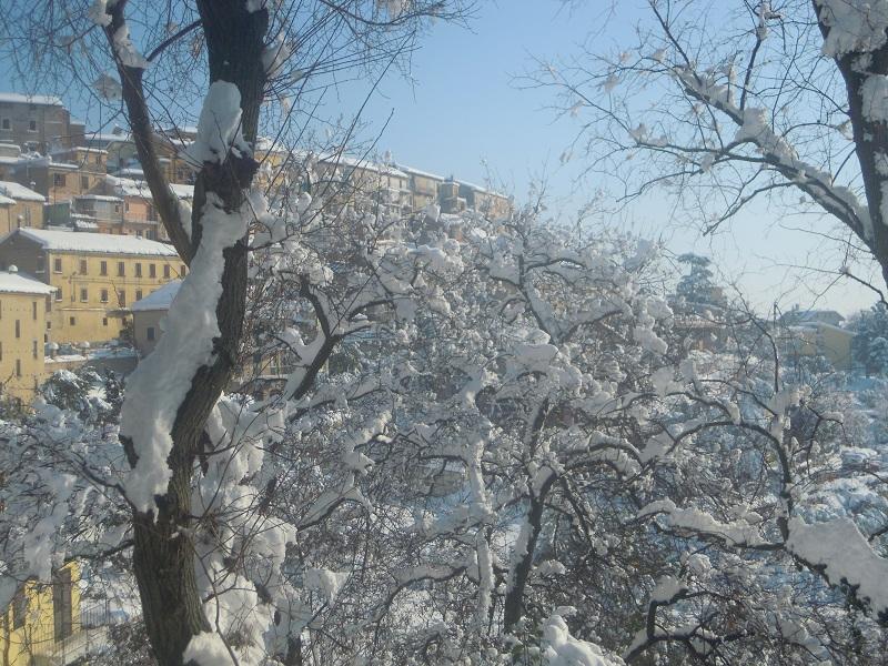 Neve a Monsampolo 11 febbraio (papanerese) 2