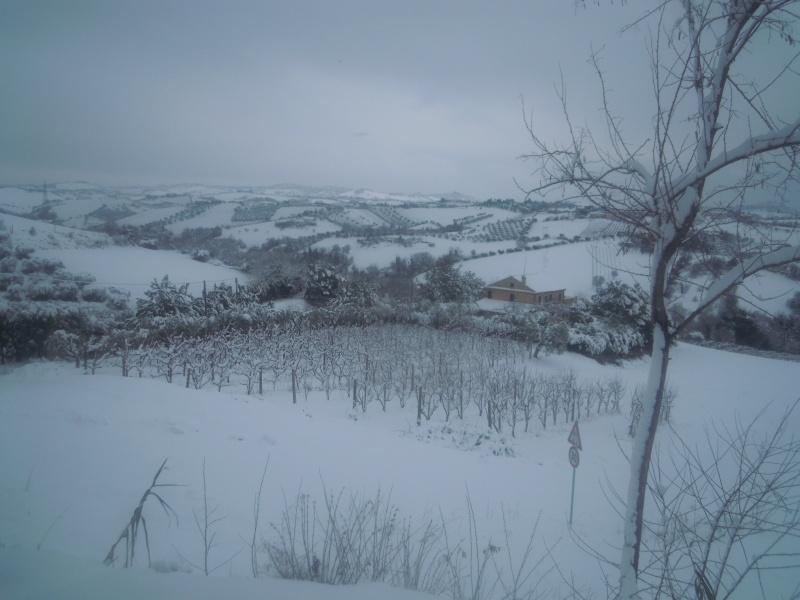 Neve a Monsampolo, panorama2, 10 febbraio 2012, Paola Panarese