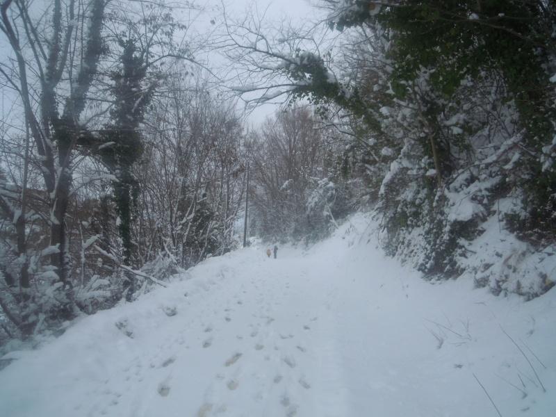 Neve a Monsampolo, sentiero, 10 febbraio 2012, Paola Panarese
