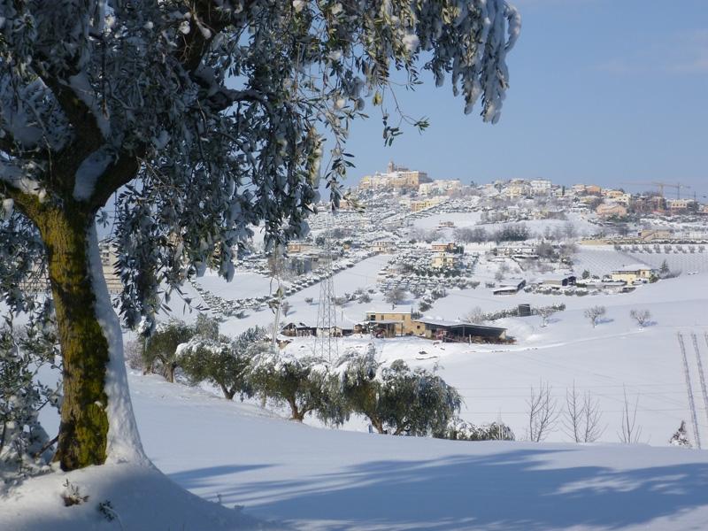 Neve a Monteprandone, 11 febbraio 2012, Graziano Traini