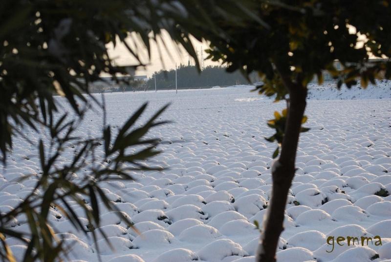 Neve a San Benedetto, 11 febbraio 2012, Gemma Spinozzi (3)