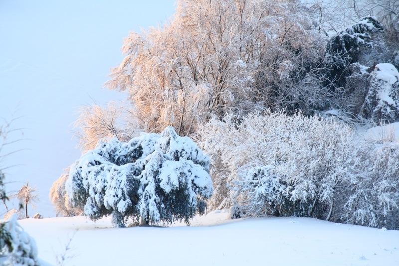 Neve ad Acquaviva, 12 febbraio 2012, Lorenzo Oddi (1)