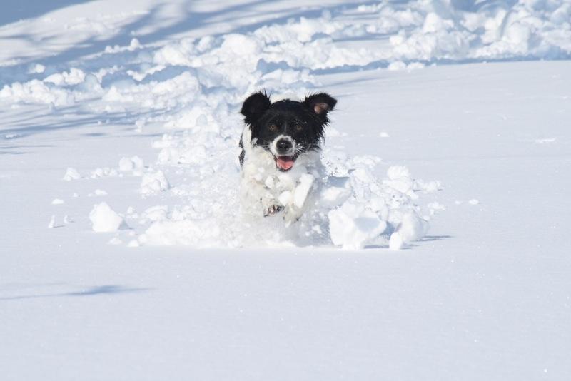 Neve ad Acquaviva, 12 febbraio 2012, Lorenzo Oddi (10)