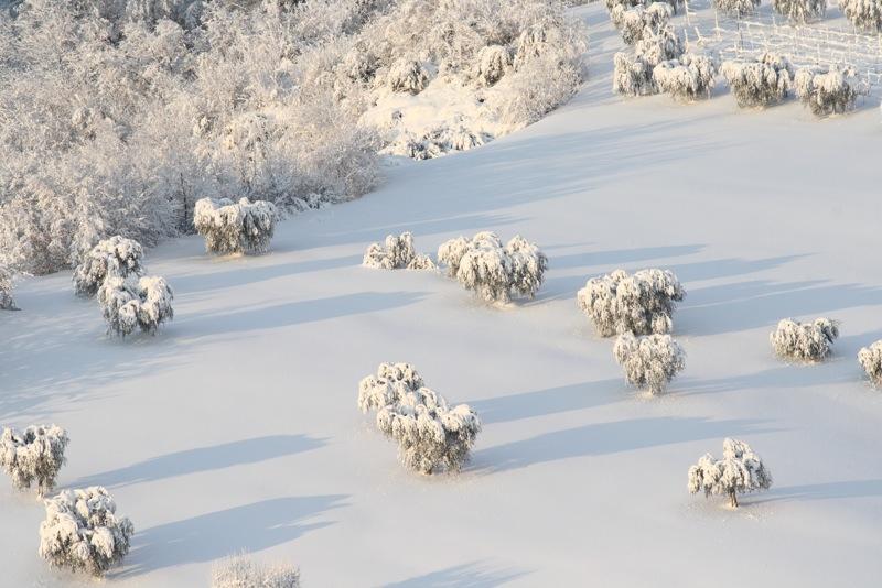 Neve ad Acquaviva, 12 febbraio 2012, Lorenzo Oddi (2)