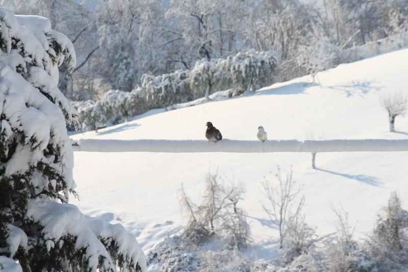 Neve ad Acquaviva, 12 febbraio 2012, Lorenzo Oddi (3)