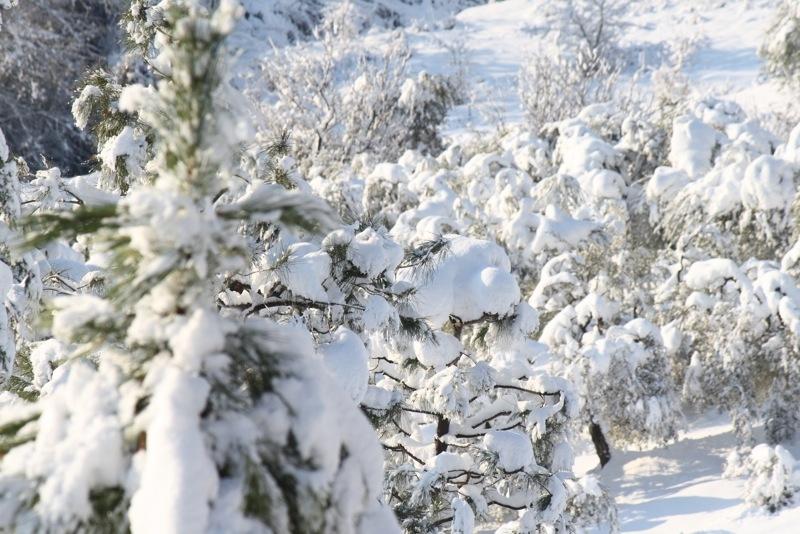 Neve ad Acquaviva, 12 febbraio 2012, Lorenzo Oddi (4)