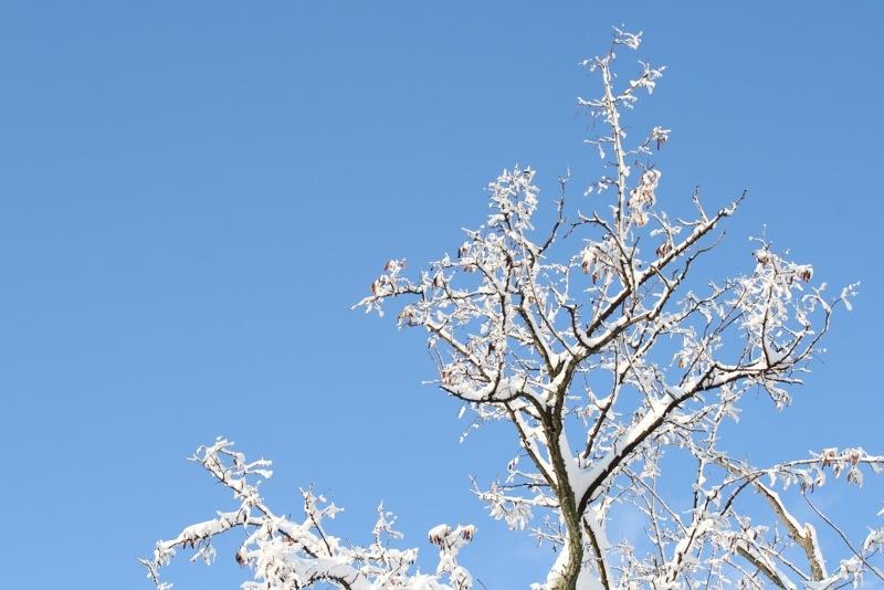 Neve ad Acquaviva, 12 febbraio 2012, Lorenzo Oddi (5)