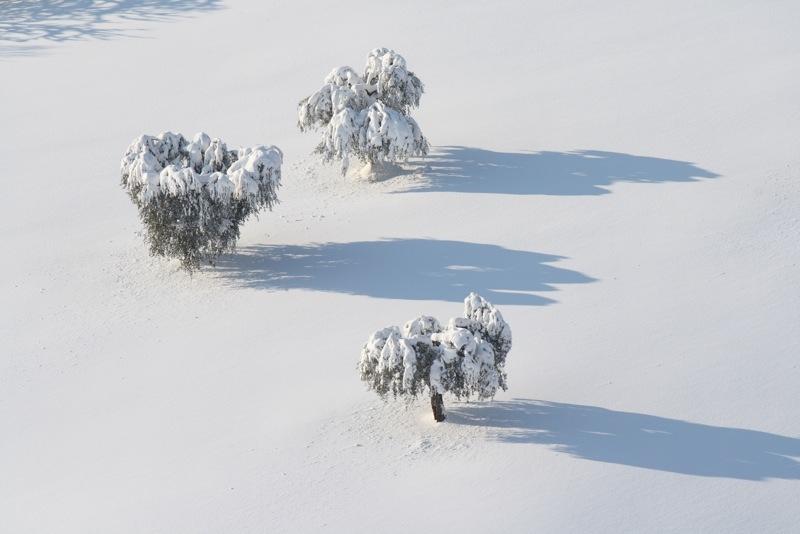 Neve ad Acquaviva, 12 febbraio 2012, Lorenzo Oddi (6)