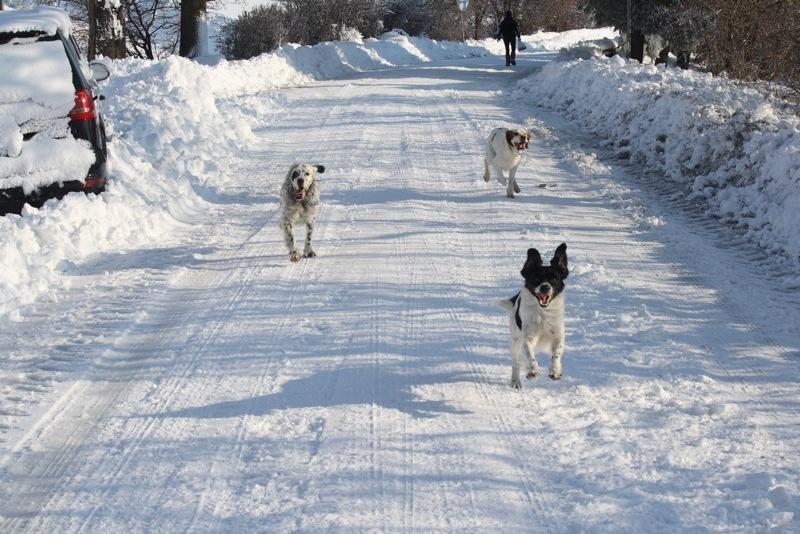 Neve ad Acquaviva, 12 febbraio 2012, Lorenzo Oddi (7)