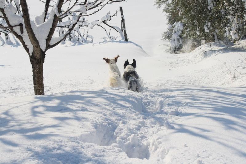 Neve ad Acquaviva, 12 febbraio 2012, Lorenzo Oddi (8)