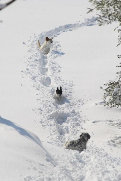 Neve ad Acquaviva, 12 febbraio 2012, Lorenzo Oddi (9)