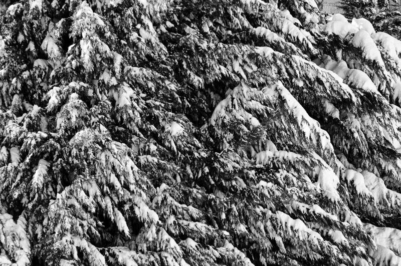 Neve ad Acquaviva Picena, 11 febbraio 2012, Andrea Tomassini (1)