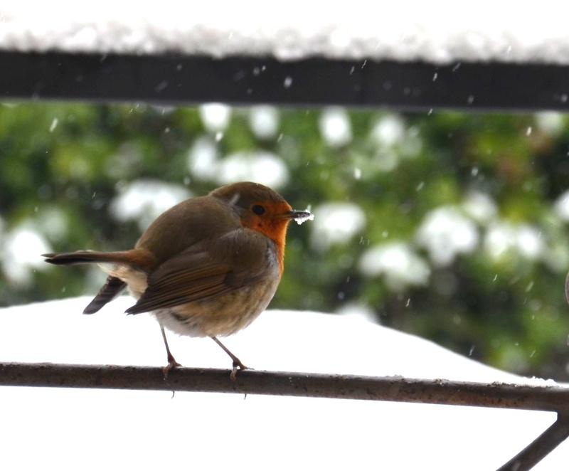 Neve ad Offida, uccellino infreddolito, 10 febbraio 2012, foto di Martina Butteri