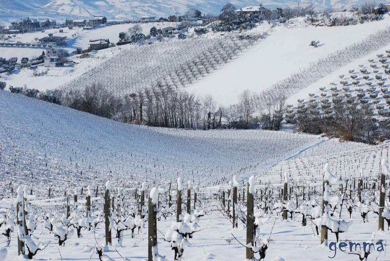 Neve sulle colline picene, 11 febbraio 2012, Gemma Spinozzi (11)