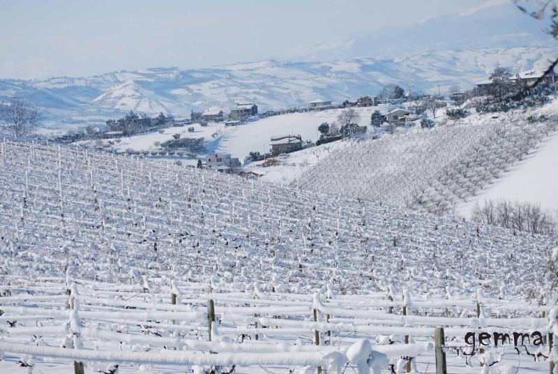 Neve sulle colline picene, 11 febbraio 2012, Gemma Spinozzi (12)