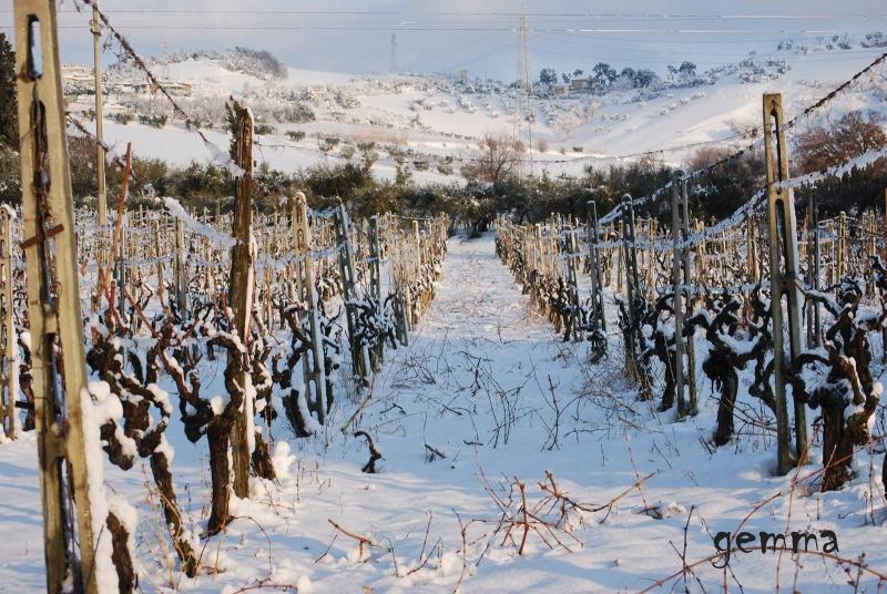Neve sulle colline picene, 11 febbraio 2012, Gemma Spinozzi (4)