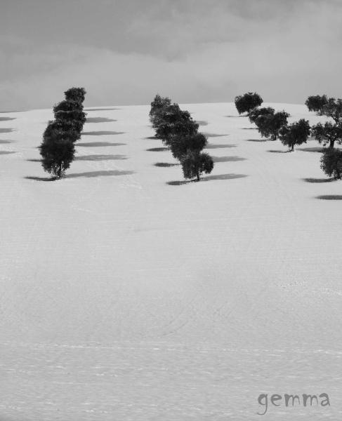 Neve sulle colline picene, 12 febbraio 2012, Gemma Spinozzi (5)