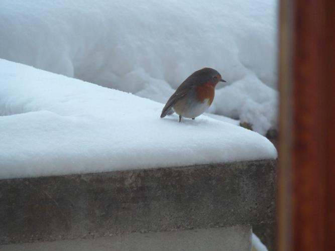 12 febbraio 2012, Massignano e la neve visti da Filippo