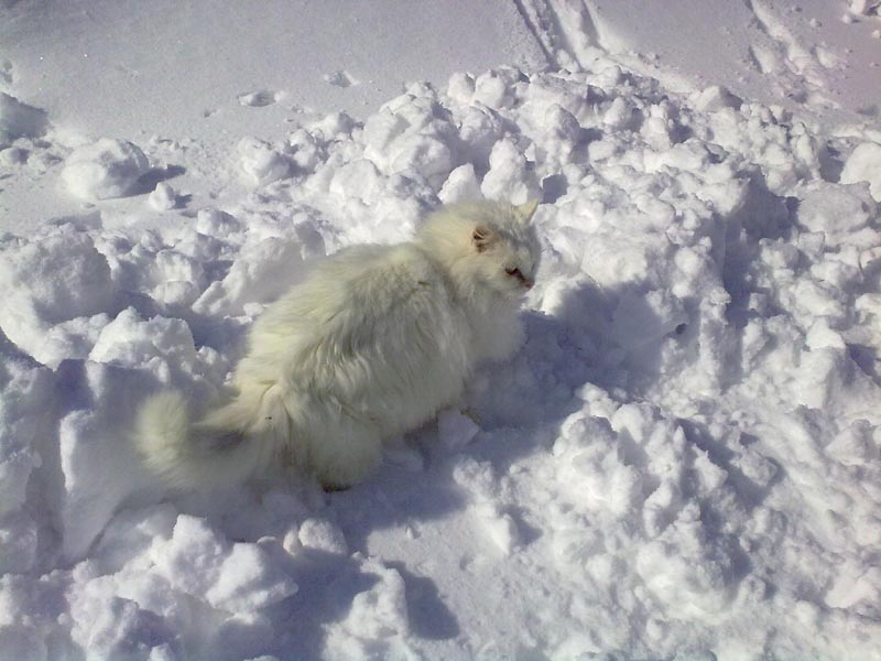 Ripatransone, mattina dell'11 febbraio, neve (Annalisa Agostini) 2