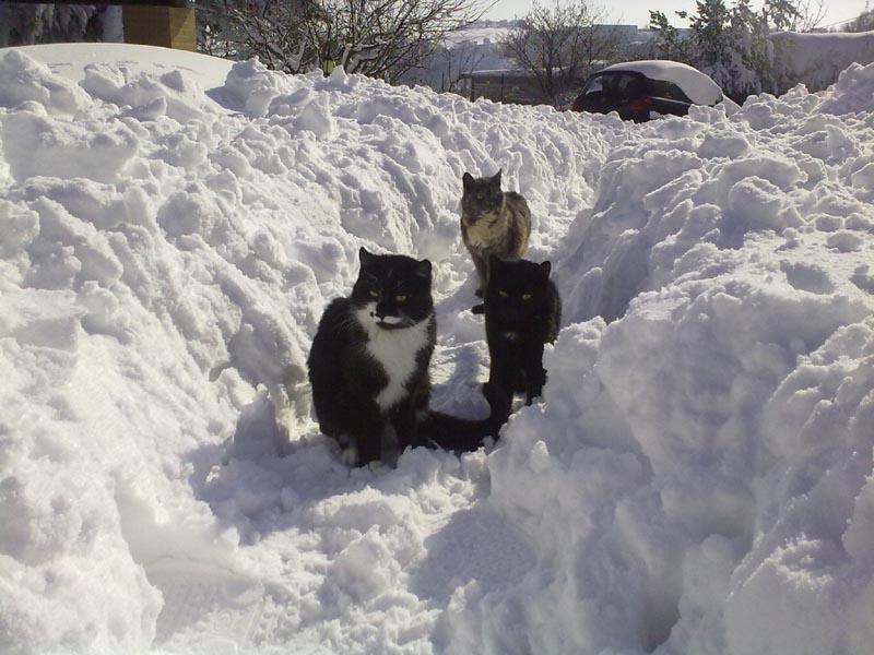 Ripatransone, mattina dell'11 febbraio, neve (Annalisa Agostini) 4