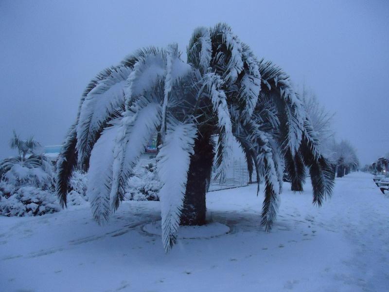 San Benedetto del Tronto, palma innevata, 3 febbraio 2012, foto di Maria Passeri