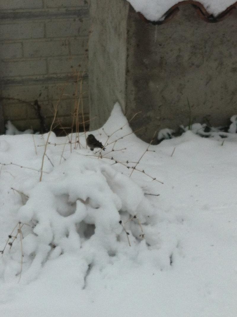 Un uccellino in cerca di cibo a Grottammare, 10 febbraio 2012, foto di Silvia Basili