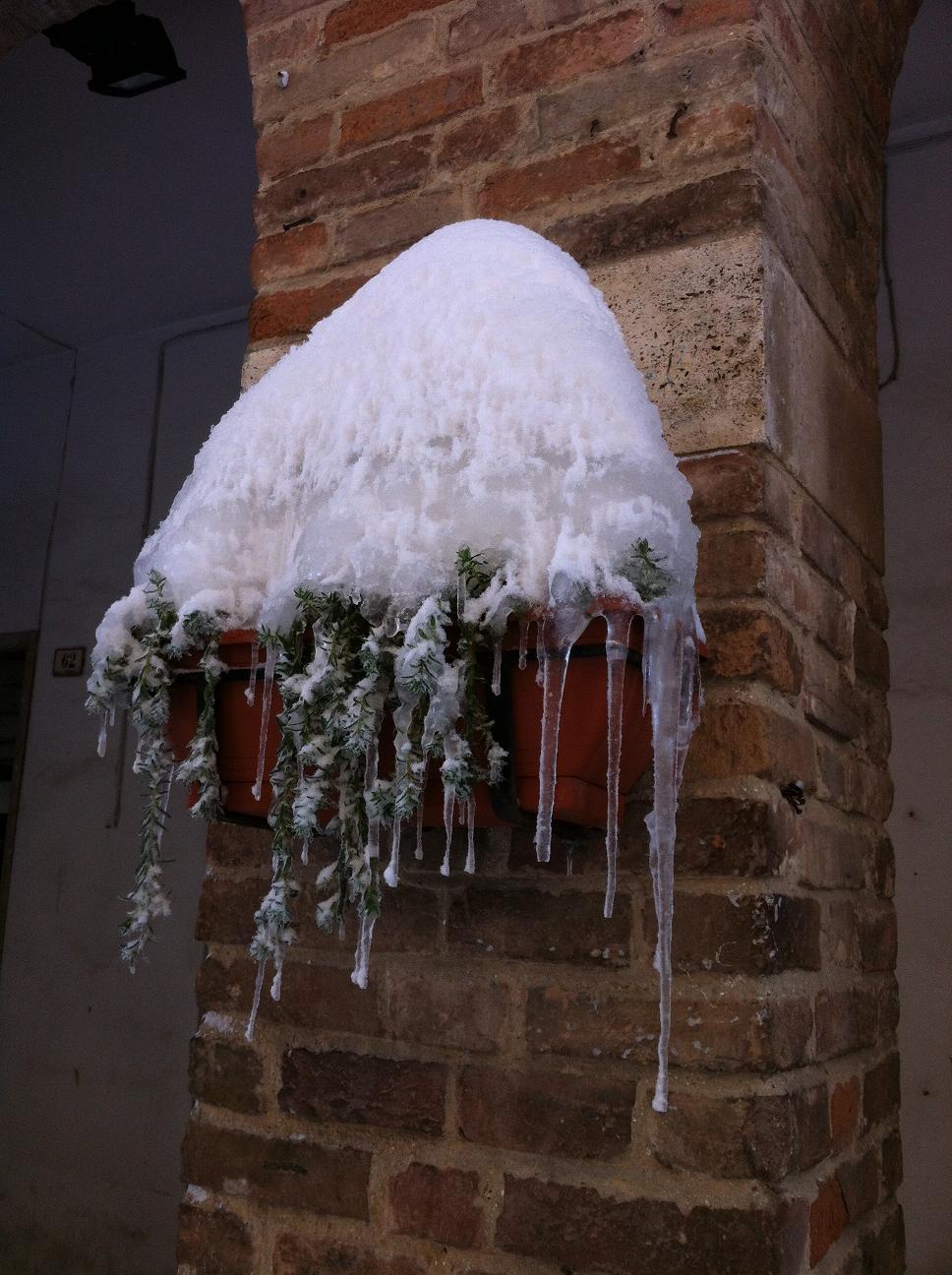 Vaso innevato, Grottammare, 11 febbraio 2012 foto Silvia Basili