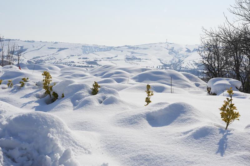 White Gobi desert. Neve a Castel di Lama l'11 febbraio 2012. Di Ernesto Pezzella