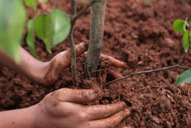 La piantumazione di un albero (immagine dal web)