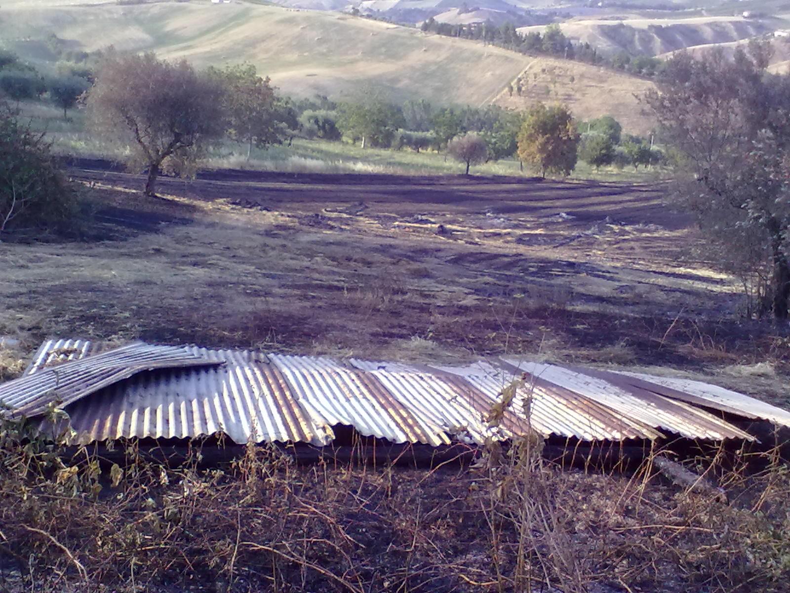 Campo di grano in contrada Tose (3)