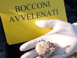 Bocconi avvelenati (Foto generica larena.it)