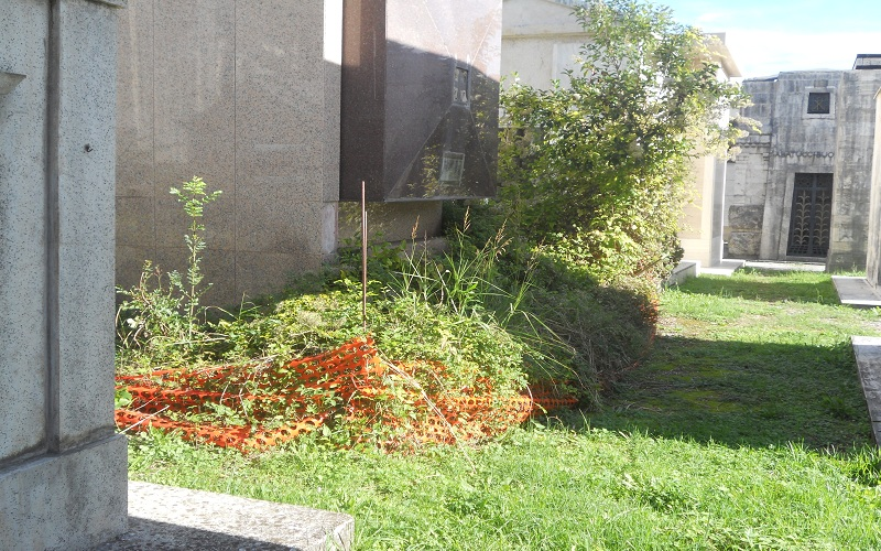 Cimitero: cespuglio dietro una tomba