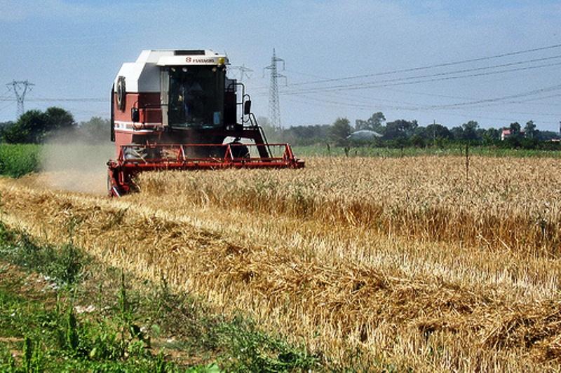 Raccolta di grano fonte google immagini